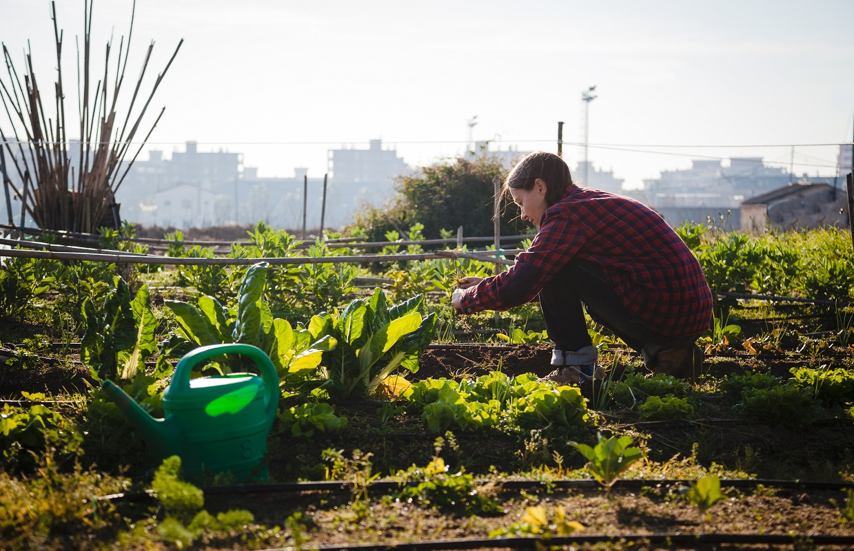Young woman with red shirt gardening in sunny urban garden; concept: sustainable lifestyle